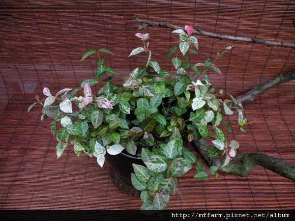 110719山野草特展 植物1.jpg