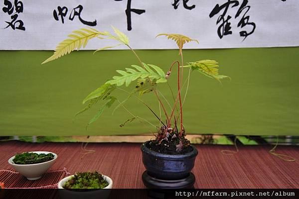2012-3-24桃花緣活動照 111