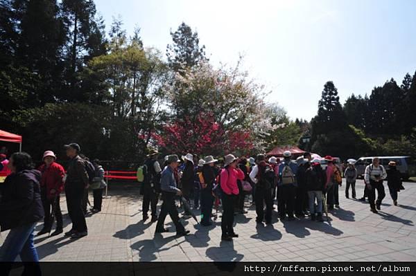 2012-3-28上午桃花緣活動照 033
