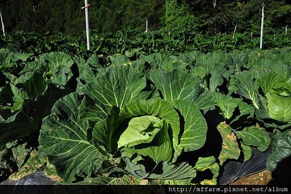 梅峰 在地蔬食 照片 (1)