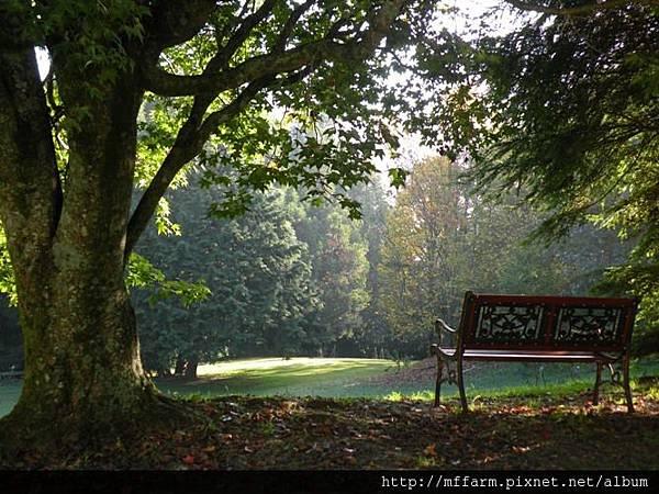 121015晨間漫步 伴月坡青楓旁的椅子