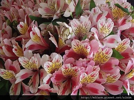 花卉生產-1.jpg