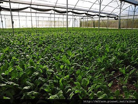 蔬菜生產1-1.jpg