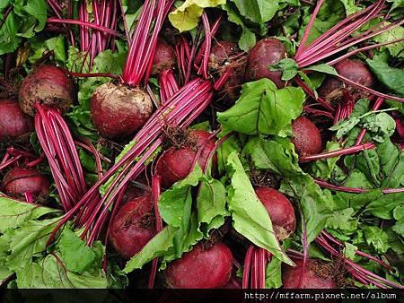 蔬菜生產2 -1.jpg