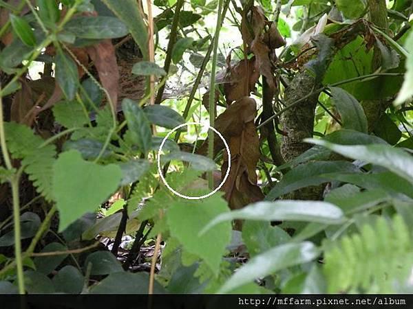 藪鳥 標示位置