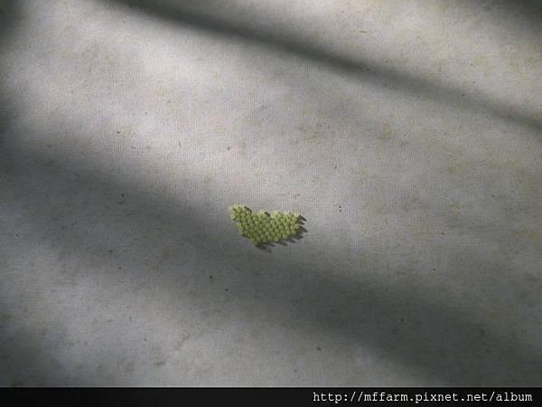 110406蟲卵有強力黏性,不用擔心脫落