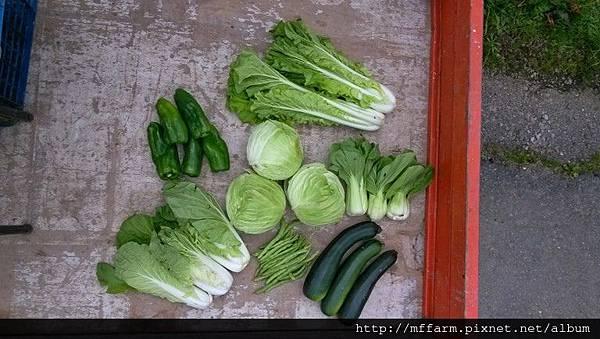 蔬菜促銷(縮小)