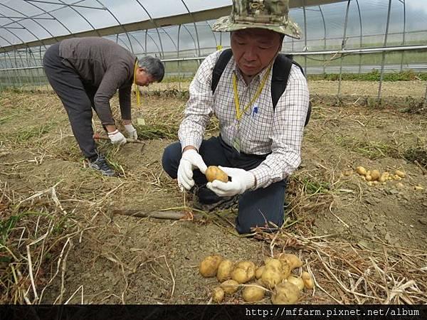 15挖馬鈴薯