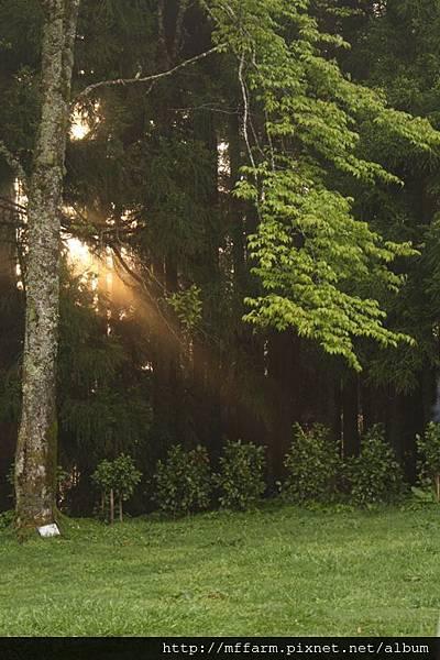 140408園藝紓壓課程 碎石機草皮 森林裡透出的光
