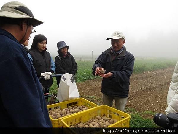 20150413園藝疏壓(李圓恩) 阿雄示範種馬鈴薯 (8)