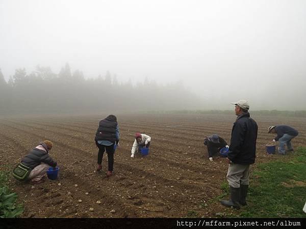 20150413園藝疏壓(李圓恩) 學員開始種植馬鈴薯 (4)