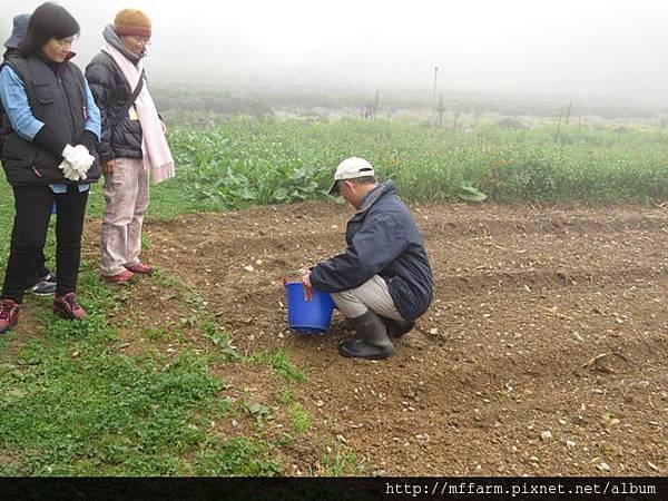 20150413園藝疏壓(李圓恩) 阿雄示範種馬鈴薯 (11)
