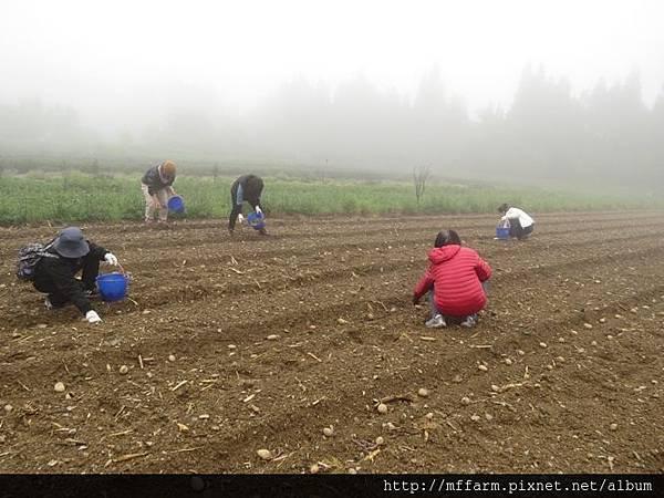 20150413園藝疏壓(李圓恩) 學員開始種植馬鈴薯 (7)