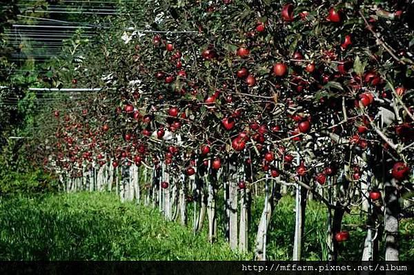 20040907004nd1德國蘋果