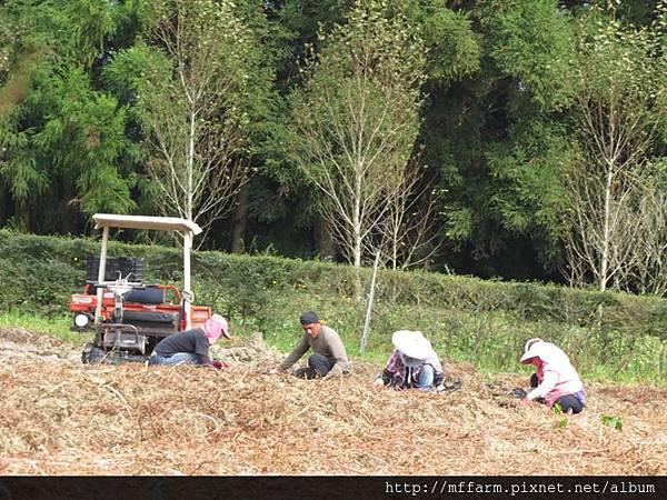 20151029挖馬鈴薯的經營組同仁 (1)