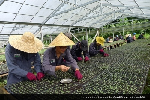 2016暑假園藝系實習照片-春陽(劉惠菱)(肖) (95)