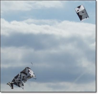 別人的風箏