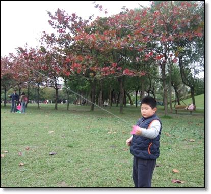 欖仁樹當背景5