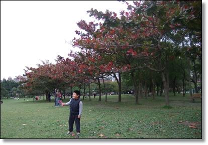 欖仁樹當背景2