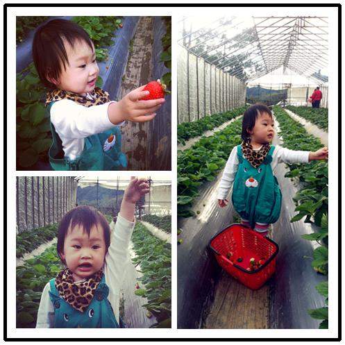 20121230採草莓初体驗