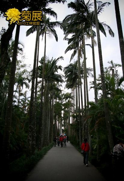椰林大道總是很壯觀