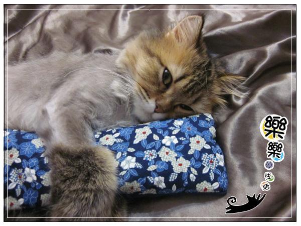 新貓草枕!!!