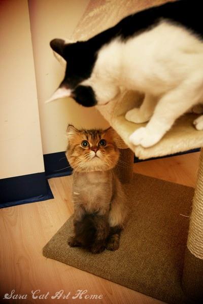 樂樂:樓上的 你看啥!! 薰:樓下的 你看啥!!