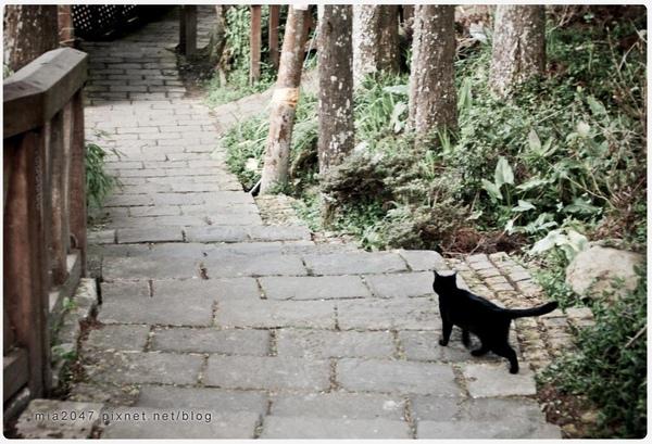 黑貓回家去