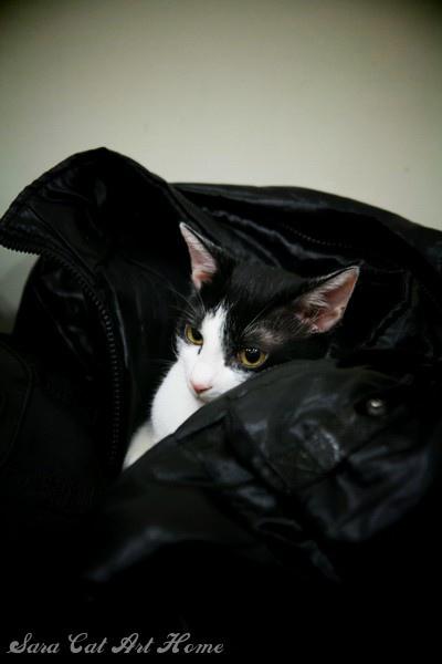 除了檢查包包!!最喜歡客人的外套~~蘇湖阿~~