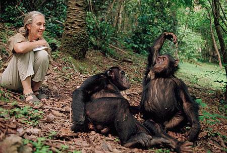 d22-two-chimps-714.jpg