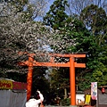 円山公園的鳥居