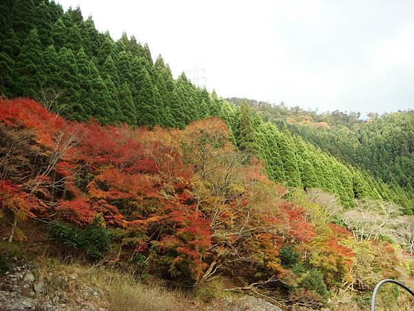嵐山保津川沿岸3