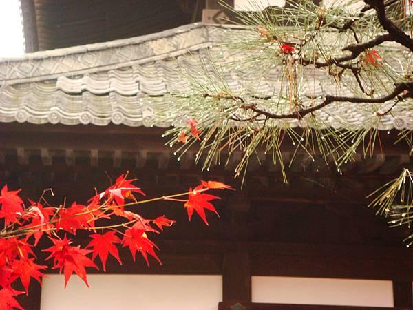 東福寺境內3(創世紀!(誤))