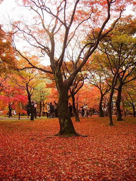 東福寺境內5