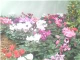 6955071_p_28.jpg