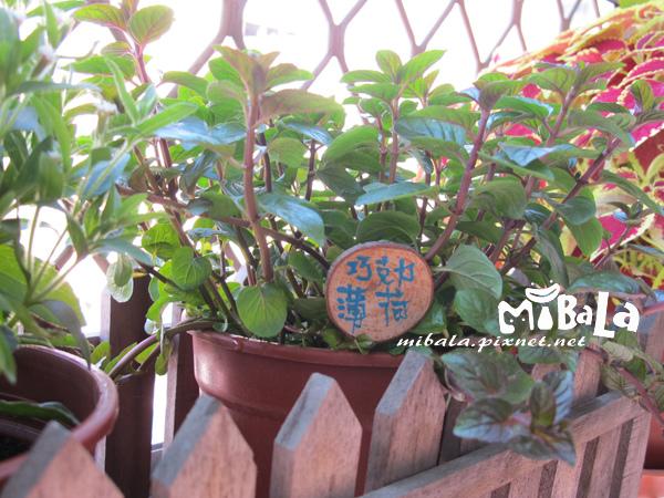 20140113-花草的小名牌