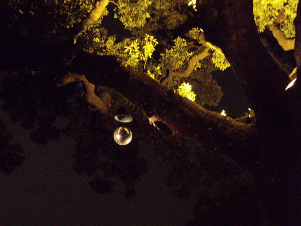旋轉燈裝置在樹上~很有情調