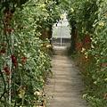 瑪莉家番茄