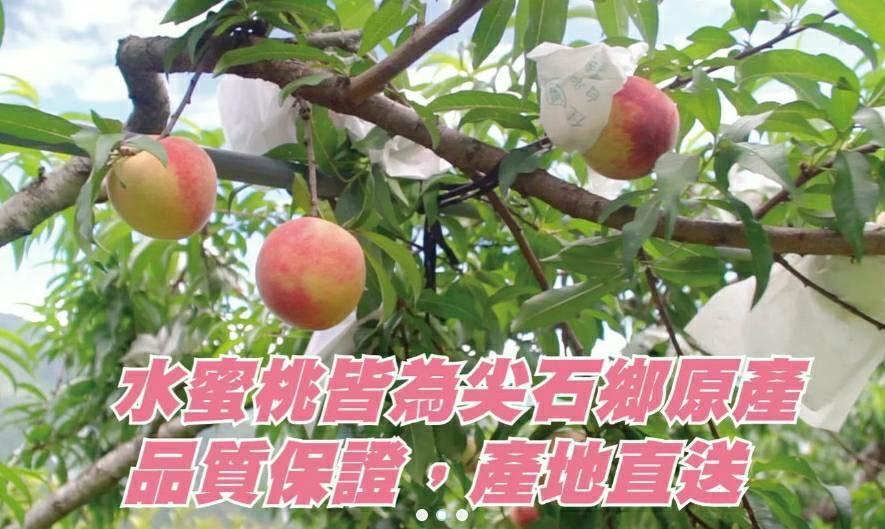 尖石鄉水蜜桃品質保證產地直送.jpg