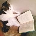 貓讀冊!日本臉友分享