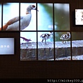 2011 PHOTO TAIPEI名人公益攝影展在市府轉運站預展輪播中 (4).JPG