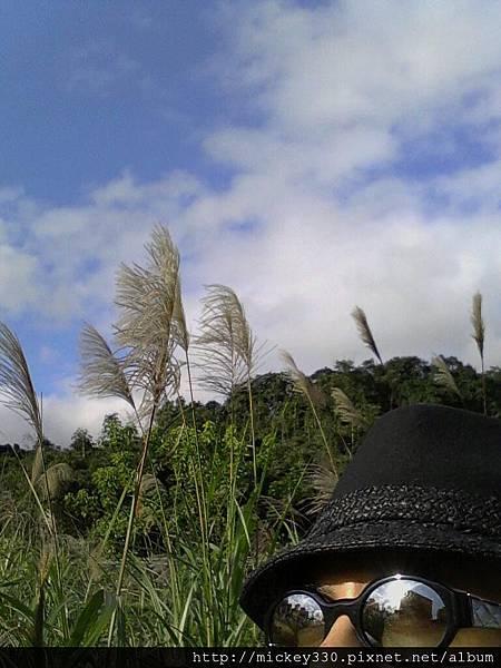 2012 2社群網站用圖~那天午後我為家附近風動的蘆葦神往不已 (2).jpg