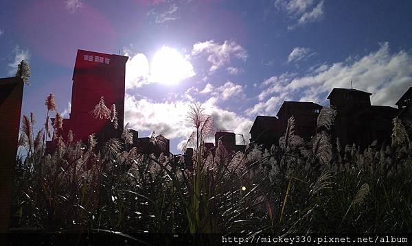 2012 2社群網站用圖~那天午後我為家附近風動的蘆葦神往不已 (3).jpg
