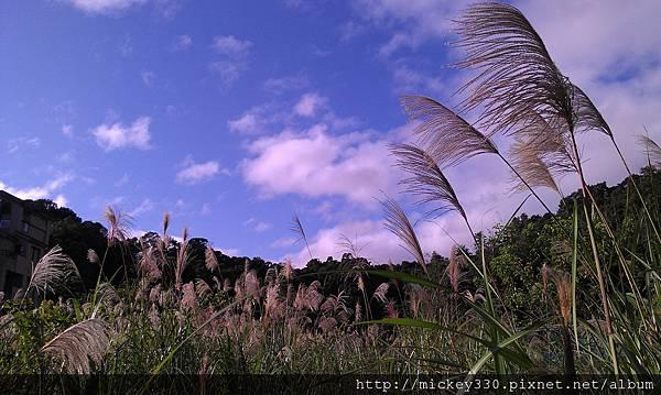 2012 2社群網站用圖~那天午後我為家附近風動的蘆葦神往不已 (4).jpg