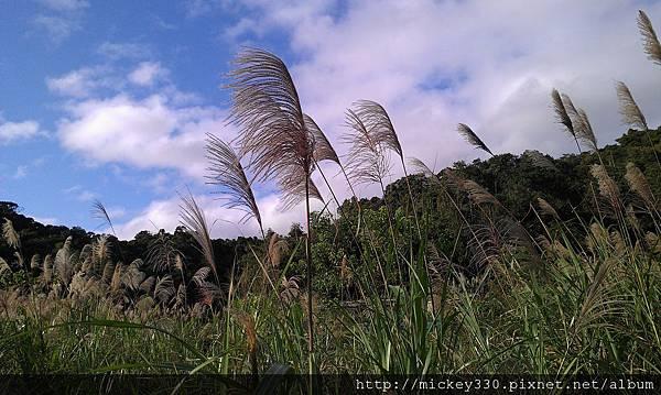 2012 2社群網站用圖~那天午後我為家附近風動的蘆葦神往不已 (5).jpg