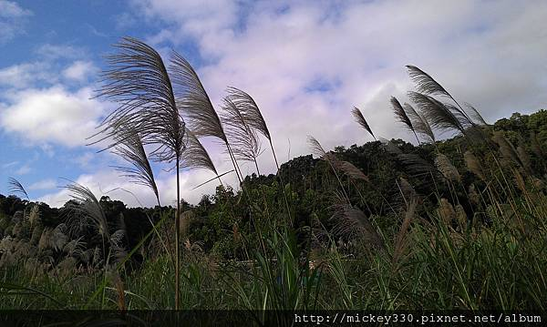2012 2社群網站用圖~那天午後我為家附近風動的蘆葦神往不已 (6).jpg