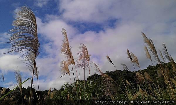 2012 2社群網站用圖~那天午後我為家附近風動的蘆葦神往不已 (7).jpg