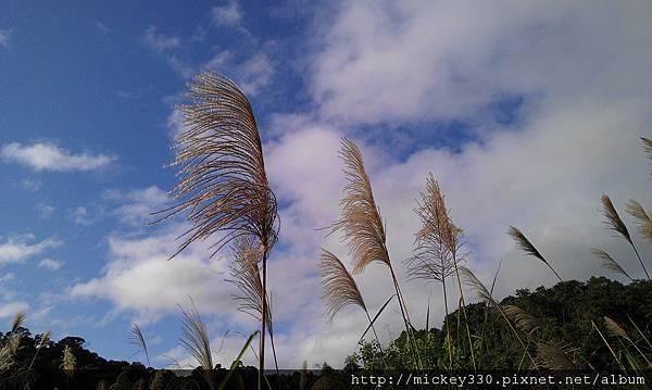2012 2社群網站用圖~那天午後我為家附近風動的蘆葦神往不已 (8).jpg