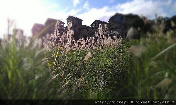 2012 2社群網站用圖~那天午後我為家附近風動的蘆葦神往不已 (10).jpg