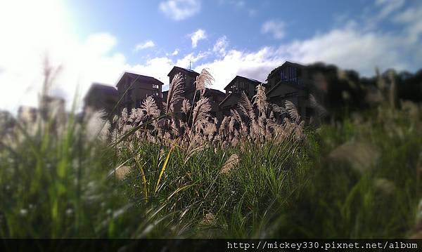 2012 2社群網站用圖~那天午後我為家附近風動的蘆葦神往不已 (11).jpg